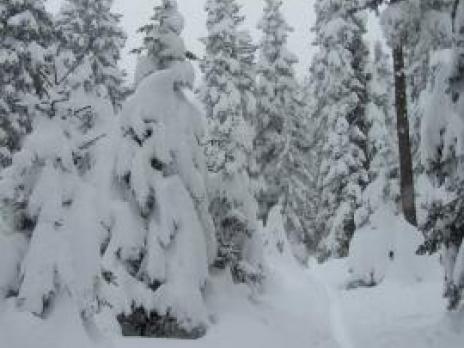 Ski de randonnée en foret - La Rosière Vanoise