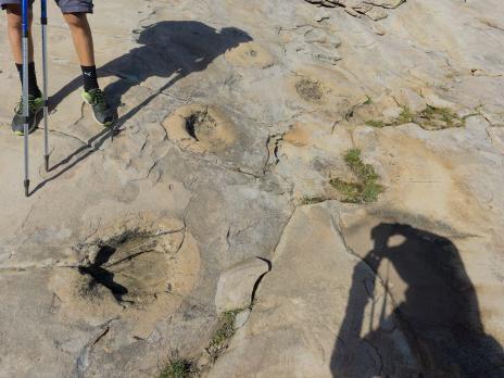 les étonnantes traces circulaires qui couvrent en grands nombres les dalles de grès.