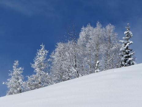 Paysage d'hiver à la Rosière
